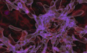 Simulación de la formación de un agujero negro por colapso directo